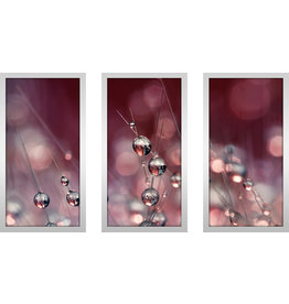 "Picture Perfect International ""Cactus Wine Drops"" by Sharon Johnstone 3 Piece Framed Photographic Print Set"