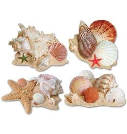 Seashell Cutouts
