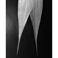 Framed Print on Rag Paper: Avoine Detail