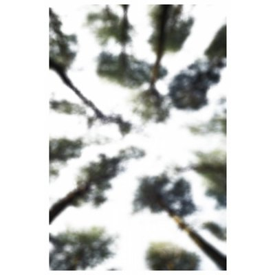 Print on Rag Paper 100% Cotton - Blurred Forest Tryptich by Alejandro Franseschini