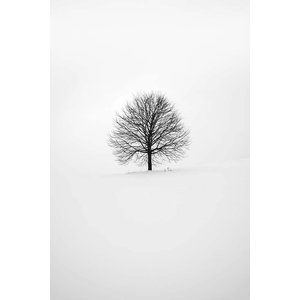 Print on Paper US250 - Linden by F. Vilard