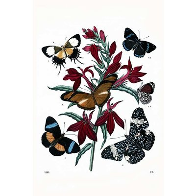 Framed Print on Rag Paper: Flowers with Butterflies Vintage Print