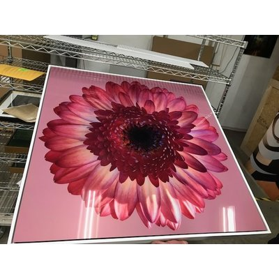 The Picturalist Facemount Acrylic: Pink Gerbera 1/4 Inch Thick Acrylic Glass