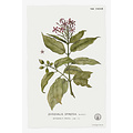 The Picturalist Framed Print on Rag Paper: Quiscalis Spinosa