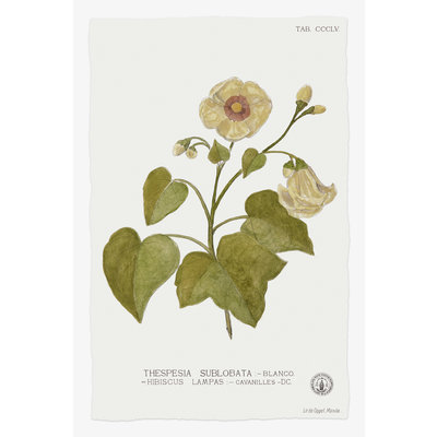 Framed Print on Rag Paper: Thespesia Botanical Print