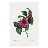 The Picturalist Framed Print on Rag Paper: Camelia Panachee