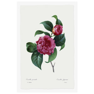 Framed Print on Rag Paper: Camelia Panachee