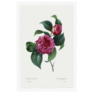 Print on Paper US250 - Camelia Panachée