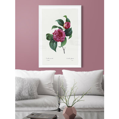 Framed Print on Rag Paper: Camelia Panachee by Redoute