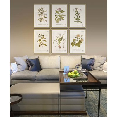 The Picturalist Framed Print on Rag Paper: Thespesia Botanical Print