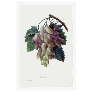 Print on Paper US250 - Grape Cornichons Blancs