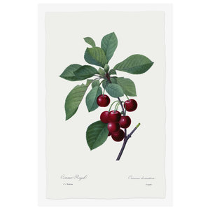 Print on Paper US250 - Cherry Tree Cerasus Domestica
