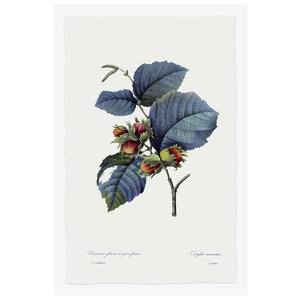 Print on Paper US250 - Hazelnut Tree
