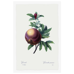 Print on Paper US250 - Pomegranate Grenadier Punica