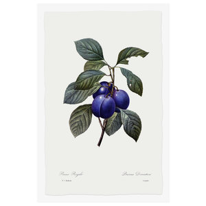 Print on Paper US250 - Prunus Domestica