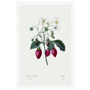 Print on Paper US250 - Fragaria Strawberry
