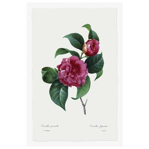 Print on Paper US250 - Camellia Panache