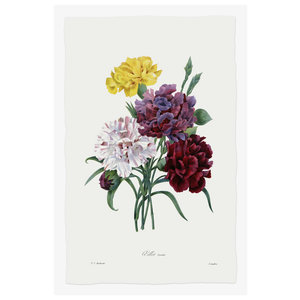 Print on Paper US250 - Carnations