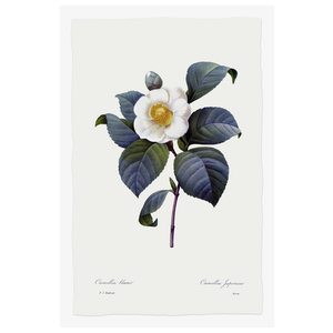 Print on Paper US250 - Camelia Japonica