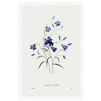 The Picturalist Framed Print on Rag Paper: Blue Campanula Clochette