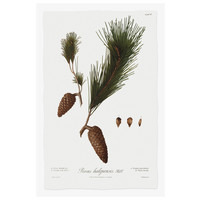The Picturalist Framed Print on Rag Paper: Pine Tree Halepensis