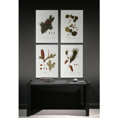 Framed Print on Rag Paper: Pine Tree Halepensis Botanical Series 3