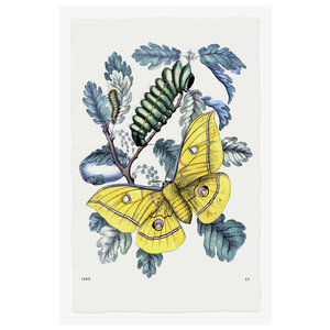 Framed Print on Rag Paper From Caterpillar To Butterfly