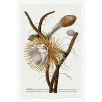 The Picturalist Framed Print on Rag Paper: Cereus