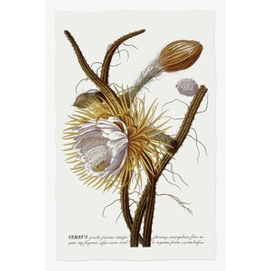 Framed Print on Rag Paper: Cereus