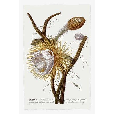 Framed Print on Rag Paper: Cereus Botanical Print