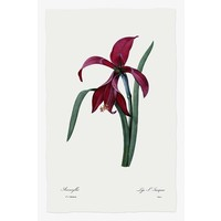Framed Print on Rag Paper: Lys