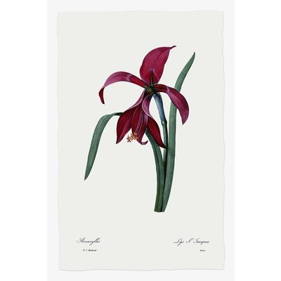 Framed Print on Rag Paper: Lys by P.J. Redoute