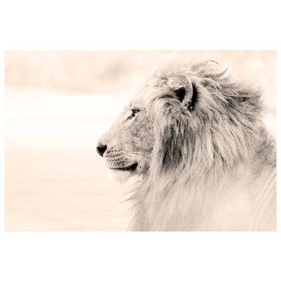 The Picturalist Framed Print on Rag Paper: Lion by G. Carrie