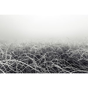The Picturalist Framed Print on Rag Paper: Seabed