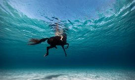 Introducing Enric Gener, Underwater Photographer from Menorca