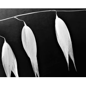 The Picturalist Framed Print on Rag Paper: Avoine 2 Photography by Eric Gizard