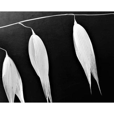 Framed Print on Rag Paper: Avoine 2 Photography by Eric Gizard