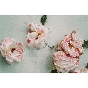 Framed Print on Rag Paper: Old Roses Stillife