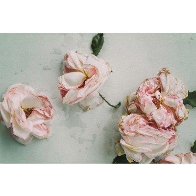 Framed Print on Rag Paper: Old Roses