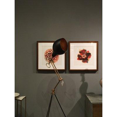 Framed Print on Rag Paper Protea by Alejandro Franseschini