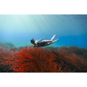 The Picturalist Facemount Acrylic: Marina by Enric Gener Seabed with Swimmer