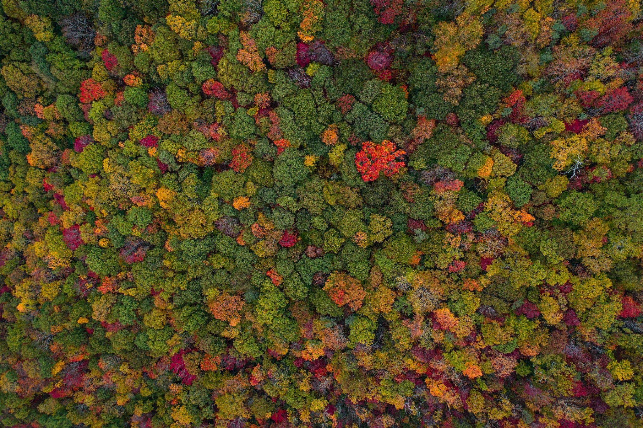 Bird's View of a Forest