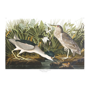 The Picturalist Framed Print on Rag Paper: Night Heron