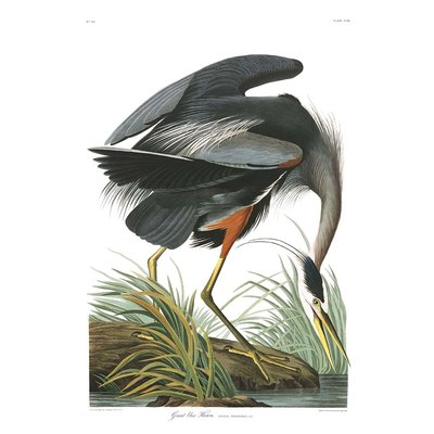 The Picturalist Framed Print on Rag Paper: Great Blue Heron by John James Audubon
