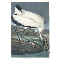Framed Print on Rag Paper: Wood Ibis