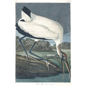 Framed Print on Rag Paper: Wood Ibis