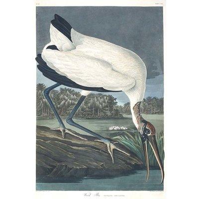 Framed Print on Rag Paper: Wood Ibis by John James Audubon