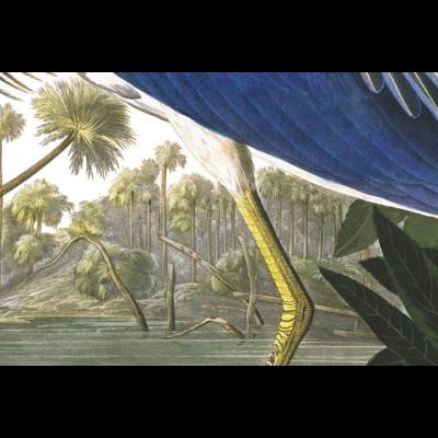 Framed Print on Rag Paper: Louisiana Heron by John James Audubon