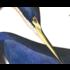The Picturalist Framed Print on Rag Paper: Louisiana Heron by John James Audubon