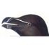 Razor Billed Auk by John James Audubon